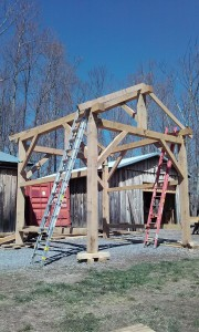 Oak timber frame raising