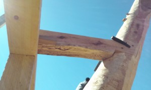 Cruck frame interrupted tie beam live edge