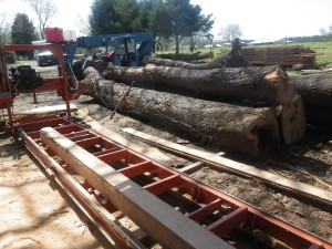 Cherry logs waiting to be milled